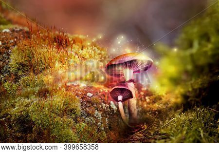 Fantasy World. Mushrooms With Magic Lights In Enchanted Forest