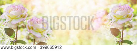 Unfocused Widescreen Background With Blooming Roses. Art Design, Summer Banner