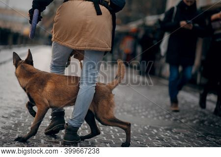 A Man Is Training With A Dog. Obedient Belgian Shepherd Dog In The City