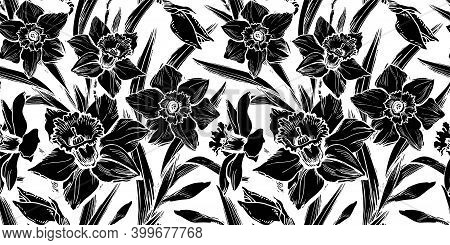 Closeup Black Daffodil Seamless Pattern Drawn By Hand On White Background. Ink Freehand Floral Ornat