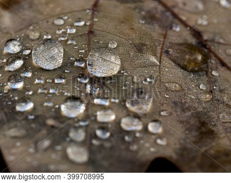 Detail Of Water Drops On Dry Leaf In Autumn, Abstract Background