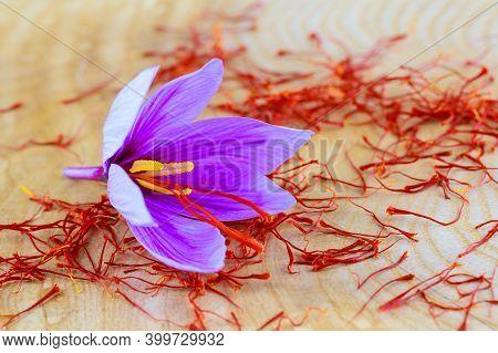 Saffron Stigmas Scattered On A Wooden Surface. Saffron Crocus Flowers.