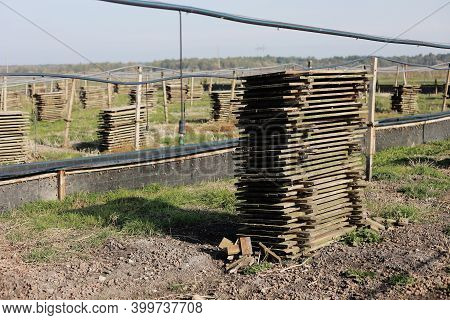 Organic Farming, Agriculture, Edible Snails On Wooden Boards. Production Of Snails. Snail Farm. Snai