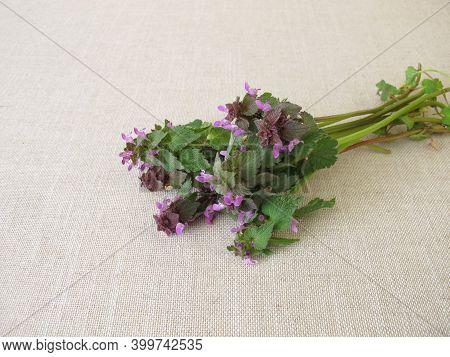 A Herb Bouquet With Purple Dead Nettle, Lamium Purpureum