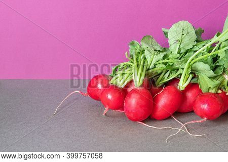 A Bunch Of Ripe Radishes With Fresh Green Leaves. Farm Harvest Of Summer Vegetables. Violet Gray Bac