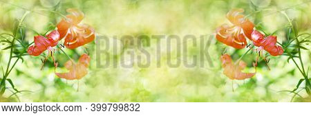 Unfocused Widescreen Background With Blooming Orange Lilies. Art Design, Banner