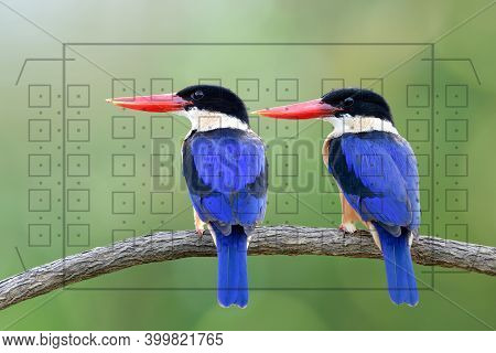 Beautiful Blue Birds With Red Beaks When Looking Through The Camera View Finder With Grid Map