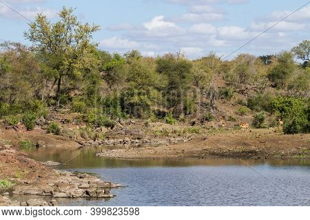 Sweni River Landscape Scenic View Of The Dam From The Bird Hide With Impala On The Bank In Kruger Na