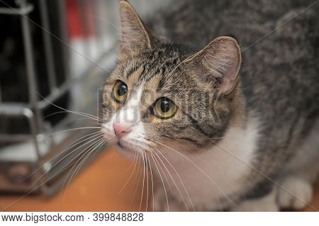 Tabby Cat With Sad Eyes At The Animal Shelter