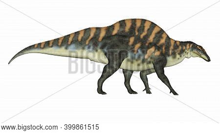 Ouranosaurus Dinosaur Walking Isolated In White Background - 3d Render