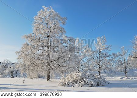 Finland. Very Beautiful Park With Snow-covered Trees In Imatra In Winter