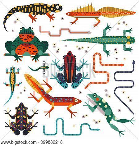 Amphibians And Frogs Flat Design Animal Set