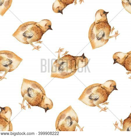 Seamless Pattern With Watercolor Image Of Chicken. Hand Drawn Illustration Isolated On White Backgro