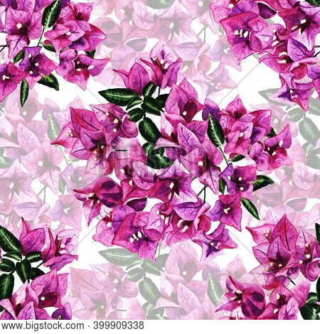 Seamless Pattern With Flowers Of Bougainvillea. Hand Drawn Watercolor Illustration. Good Design For