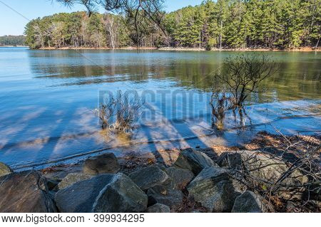 Looking Through Trees In The Shade On A Sunny Day At The Shoreline At Lake Lanier In Georgia In Late