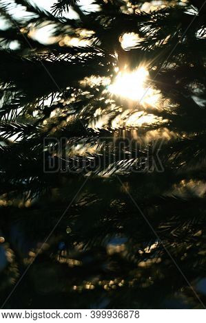 Atmosphere Fir Background. Abstract Winter Background, Fir Branches.