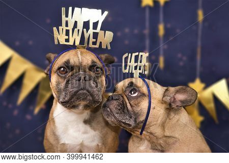 Funny French Bulldog Dogs Wearing Golden Party Celebration Headbands With Words 'happy New Year' And