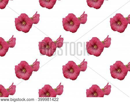 Mallow Double Pink Flower Isolated On A White Background. For Design. Seamless Patterns. Seamless Pa