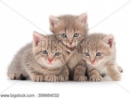 Three Baby Kittens In Front Isolated On White Background.