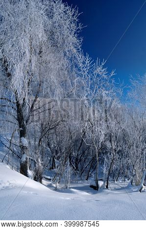Winter landscape, frosty winter trees in cold sunny winter weather, winter trees covered with ice. Winter forest nature, winter sunny landscape, winter trees in the morning winter forest