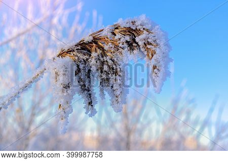 Winter landscape with snowy winter field and frozen winter plants. Selective focus at the central plant, shallow DOF, winter field landscape, natural winter field scene