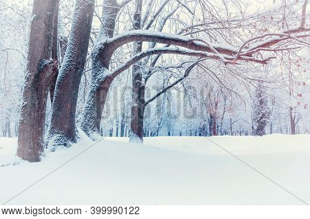 Winter landscape, north winter forest with deciduous winter trees covered with frost. Snowy winter background, winter landscape, snowy winter nature, winter trees in cloudy winter day