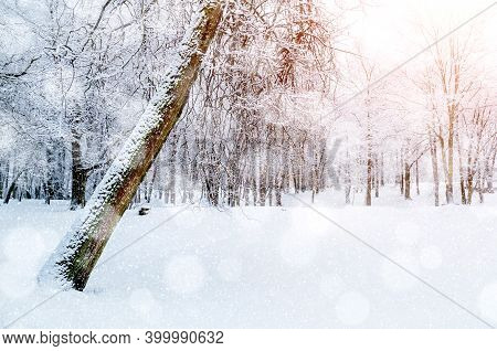 Winter landscape, soft winter sunrise light in the winter forest, picturesque winter morning with forest winter trees and winter nature covered with snow, winter landscape scene