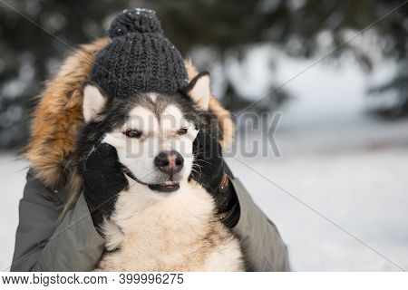 Woman Hugging With Smiling Alaskan Malamute In Winter Forest. Close Up Portrait.
