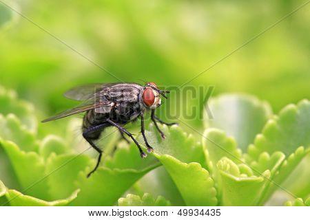Closeup Of Flies