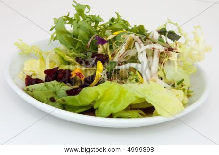 Salad Of Frisee And Bibb Lettuce; Radishes; Spring Onions, And Toasted Pumpkin Seeds