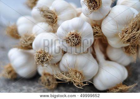 Garlic Braid Details