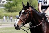 horse & rider wait before an equestrian competition (shallow focus). poster