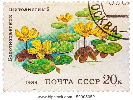 Stamp From The Ussr Shows Image Of Belotsvetnik Schitolistny