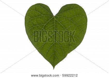 Heart Leaf Full Frame Landscape