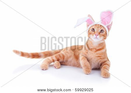 An Easter bunny cat in bunny ears