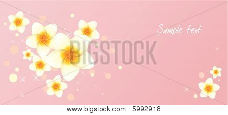 Background with frangipani flowers