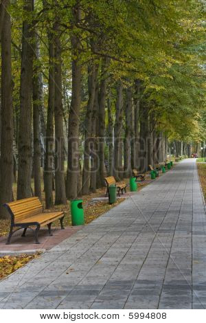 Alley With Benches In Park.