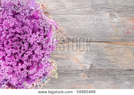 Curly-leaf Purple Kale On A Rustic Wooden Board