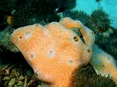 Underwater inhabitants of sea depths of strait Cebu, island Maktan, sponge poster
