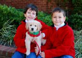 Two young boys holding their Christmas golden retriever puppy. poster