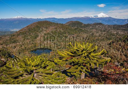 Trekking In Reserva El Cani, Near Pucon, Chile