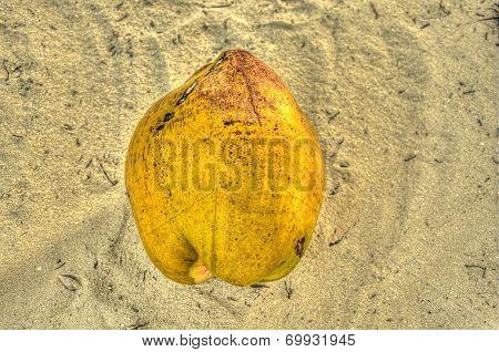 Coconut husk on sand beach