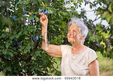 Closeup portrait of a senior farmer woman outdoor