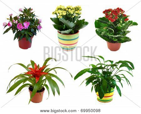 Potted Flowers Isolated On White Background, Collage