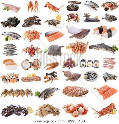 Seafood, Fish And Shellfish