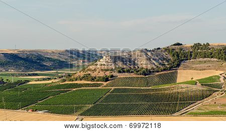 Vineyards In Penafiel