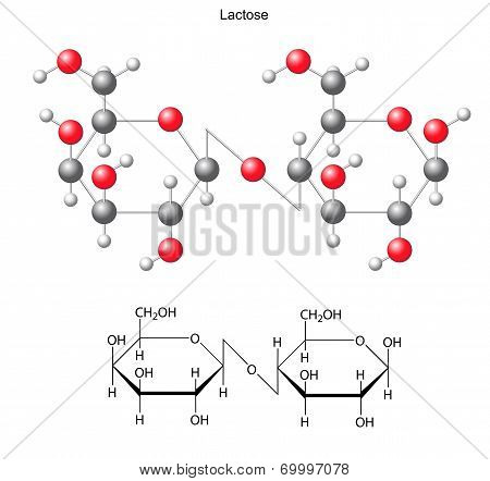 Structural Chemical Formula And Model Of  Lactose
