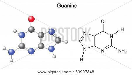 Chemical structural formula and model of guanine (DNA and RNA nitrogen base), illustration,  isolated on white background, vector, eps8 poster