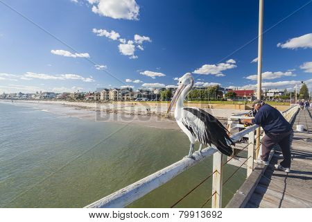People fishing at Henley beach jetty, Adelaide, South Australia