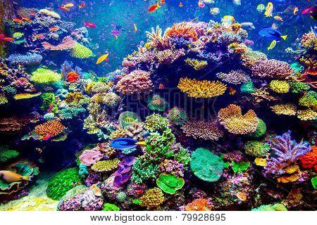 Coral Reef and Tropical Fish in Sunlight. Singapore aquarium
